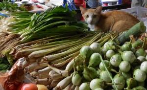 למון גראס בשוק בנונג קאי (מתחת לסנטר של החתול)